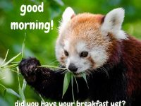 Beautiful good morning pictures download