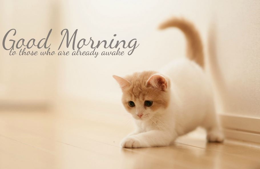 Best cat good morning pictures