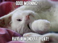 Cute Cat Good Morning Memes for her