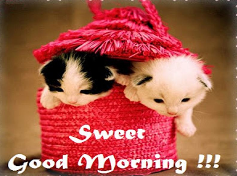 Cute Good Morning hd wallpaper | Good Morning Images