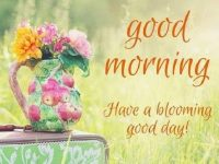 Cute good morning flowers picture