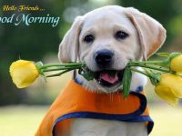 Cute dog good morning pictures