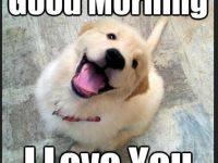 Dog Good Morning Memes download