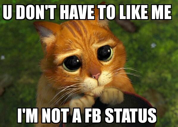 Facebook Funny Cat Good Morning Memes