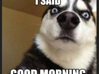 Funny Good Morning Meme images 200x150 funny good morning meme images download good morning images