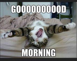 Funny good morning cute memes