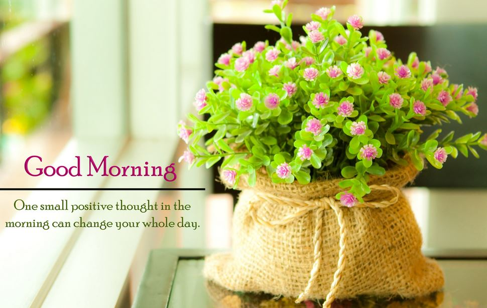 Good Morning Flowers wallpapers hd
