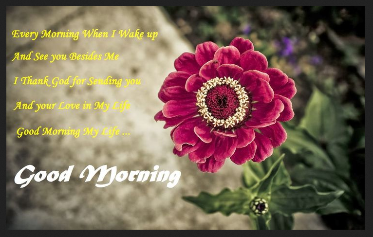 Good Morning flowers with quote images
