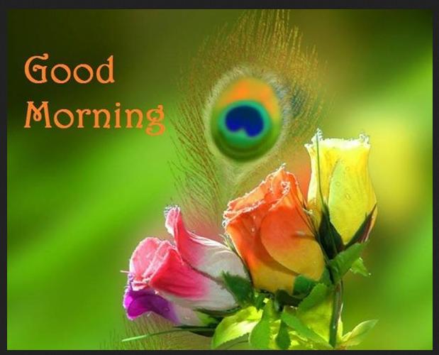 Good Morning hd wallpapers free Download Pics | Good Morning