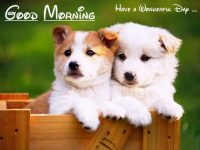 Lovely cute good morning pictures