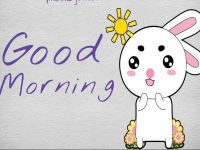 cat good morning pictures