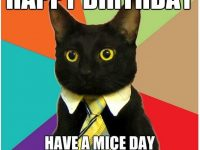 Beautiful Cat Happy birthday memes pics