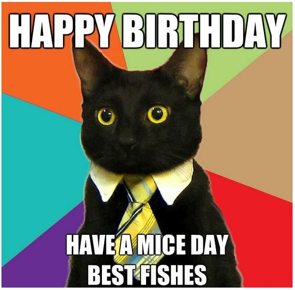 Beautiful Cat Happy birthday memes pics