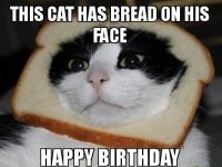 Cat Happy birthday memes images