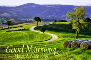 Cool good morning images with nature