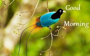 Good morning nature hd image