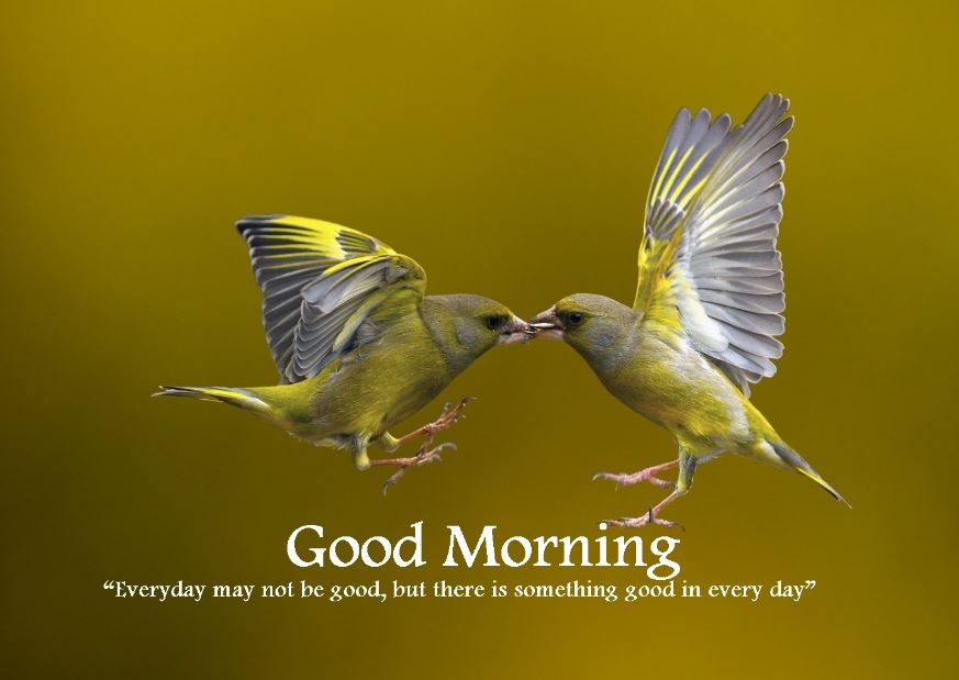 Good morning images bird quotes