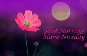 Good morning videos for whatsapp free download