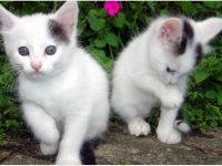 Beautiful kitten images of good morning