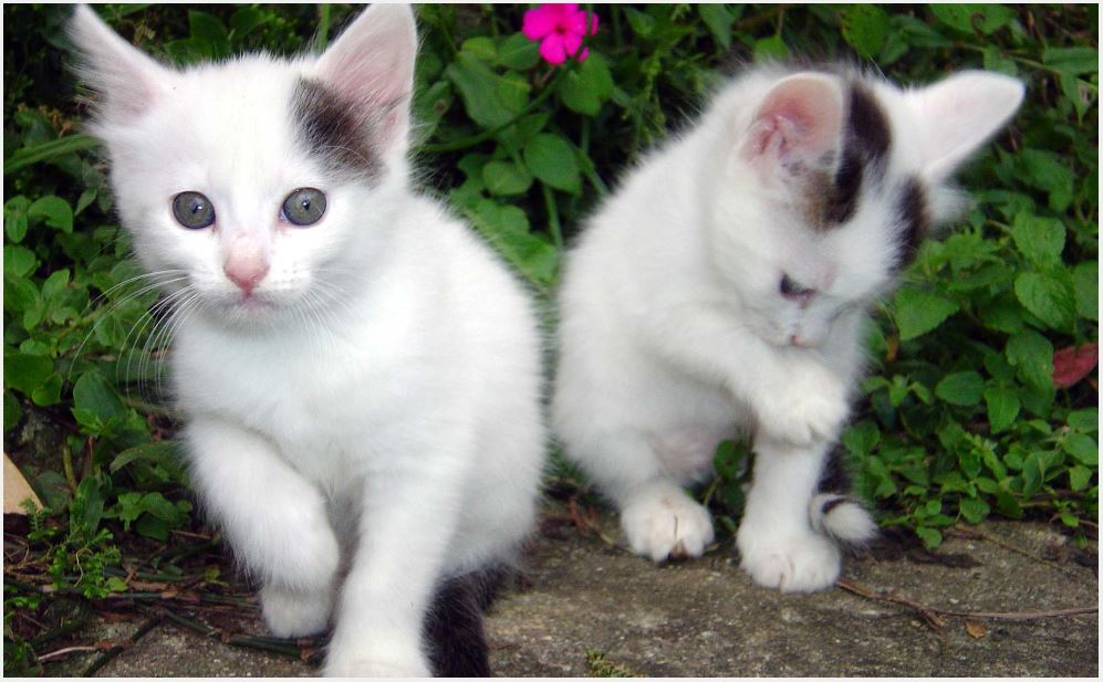 Beautiful kitten images of good morning
