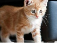 beautiful kitten pictures