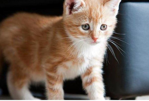 beautiful kitten pictures