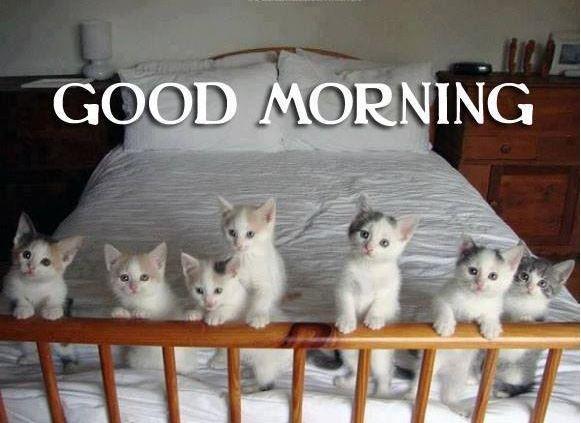 Beautiful pupes kitten pictures