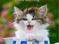 cute good morning kitten