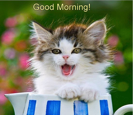 cute good morning kitten