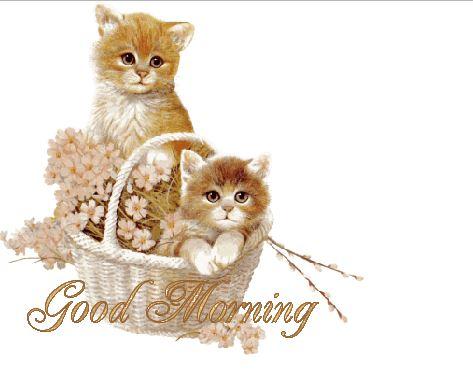 Good morning kitten photos