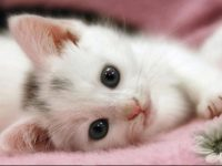 Pictures of kittens and cats