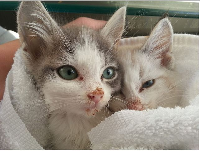 Pictures of kittens and puppies